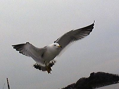 20090308_umineko2